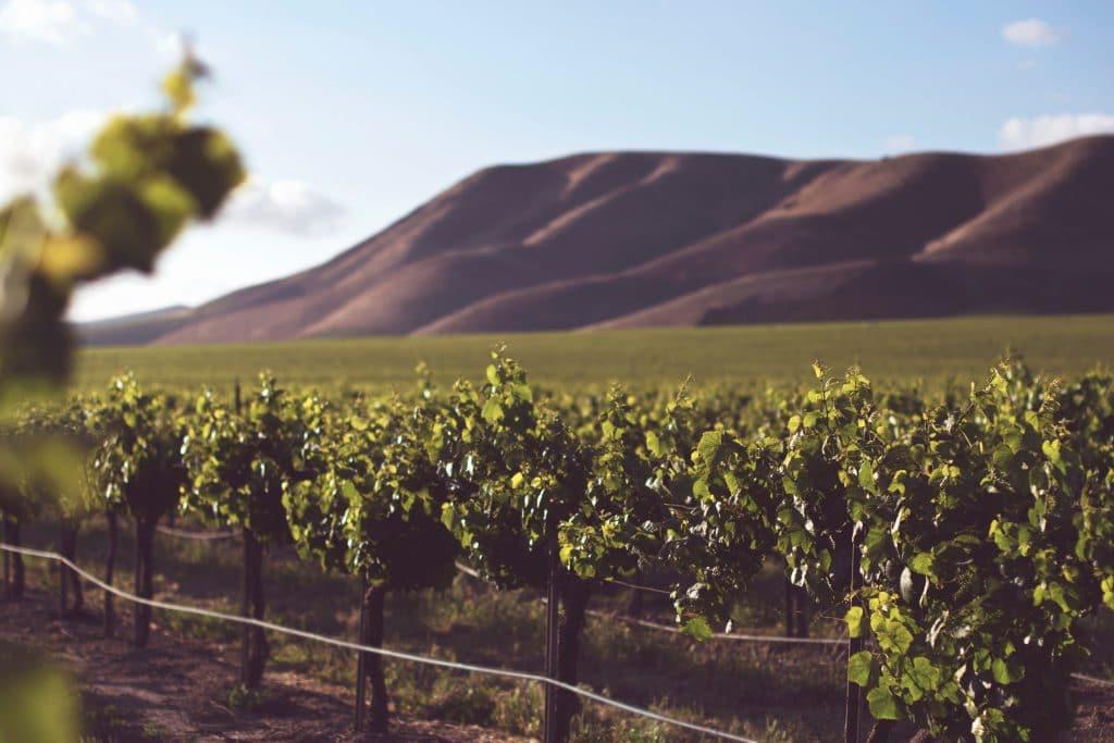 Winey landscape